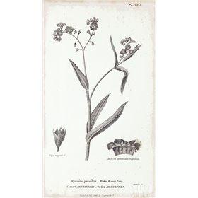 Conversations on Botany I