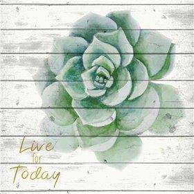 Live for Today 1