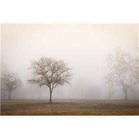 Trees in Fog 2