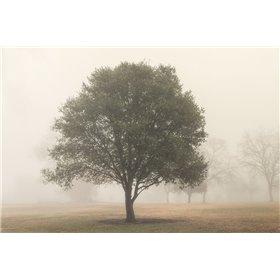 Trees in Fog 6