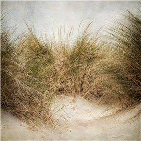 Beach Grasses 1