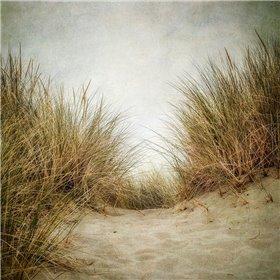 Beach Grasses 2