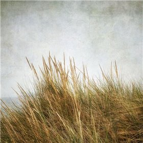 Beach Grasses 3