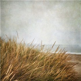 Beach Grasses 4