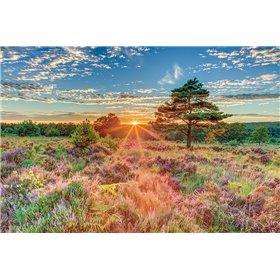 Heathland Sunset