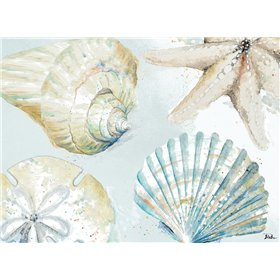 Shell Collectors