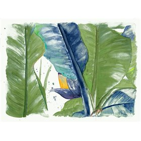 Fresh Banana Plantain Vibrant
