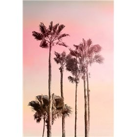 Pink Sunset 1