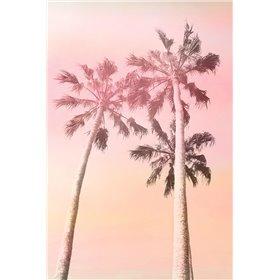 Pink Sunset 2