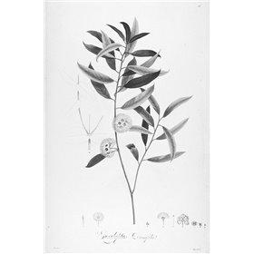 Botanical Eclipse 2