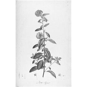 Botanical Eclipse 3