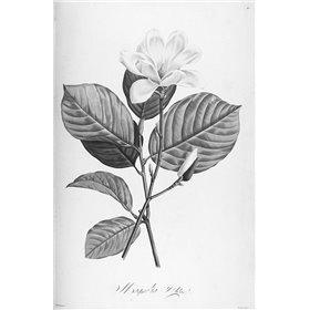 Botanical Eclipse 4