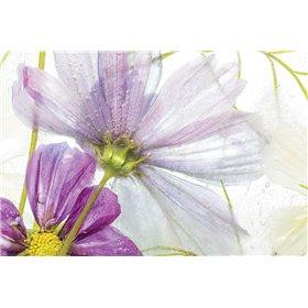 Frozen Floral I