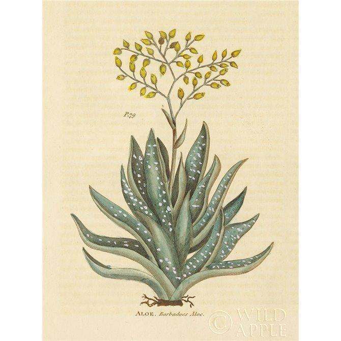 Herbal Botanical XXXI