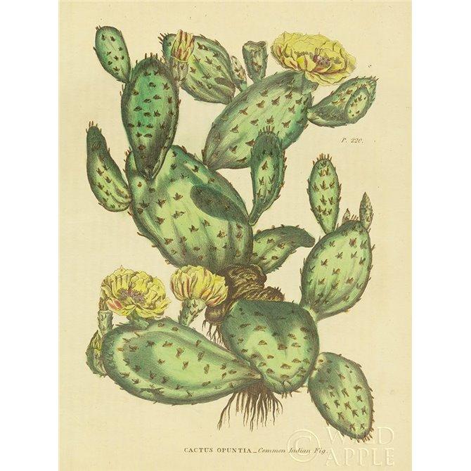 Herbal Botanical XXIX