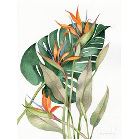 Botanical Birds of Paradise