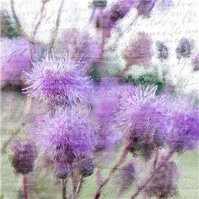 Purple Thistle 2