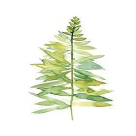 Tropical Botanical II