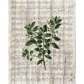 Musical Botanical 2