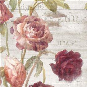 French Roses IV