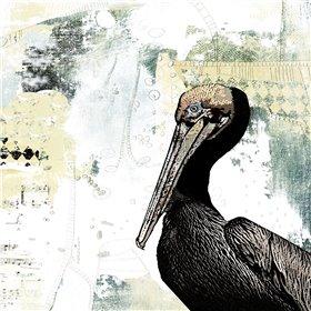 Pelican Palm