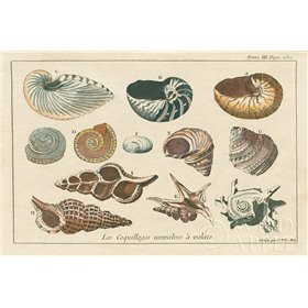 Shell Etchings I