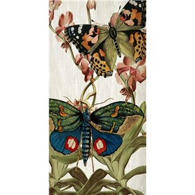 Butterfly World 3