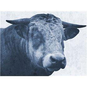Tone And Tonal Bull