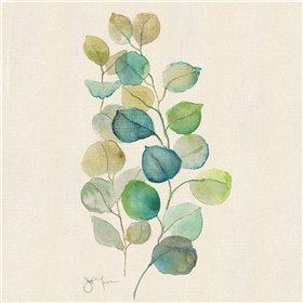 Eucalyptus II