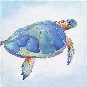 Galapagos Sea Turtle I