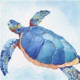 Galapagos Sea Turtle II