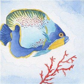 Galapagos Fish I