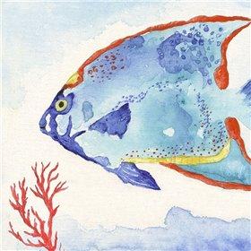 Galapagos Fish II