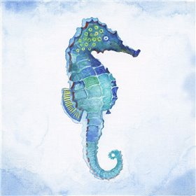 Galapagos Sea Horse