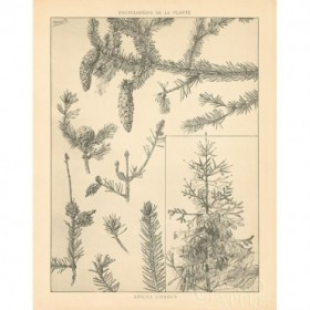 Vintage Tree Sketches I