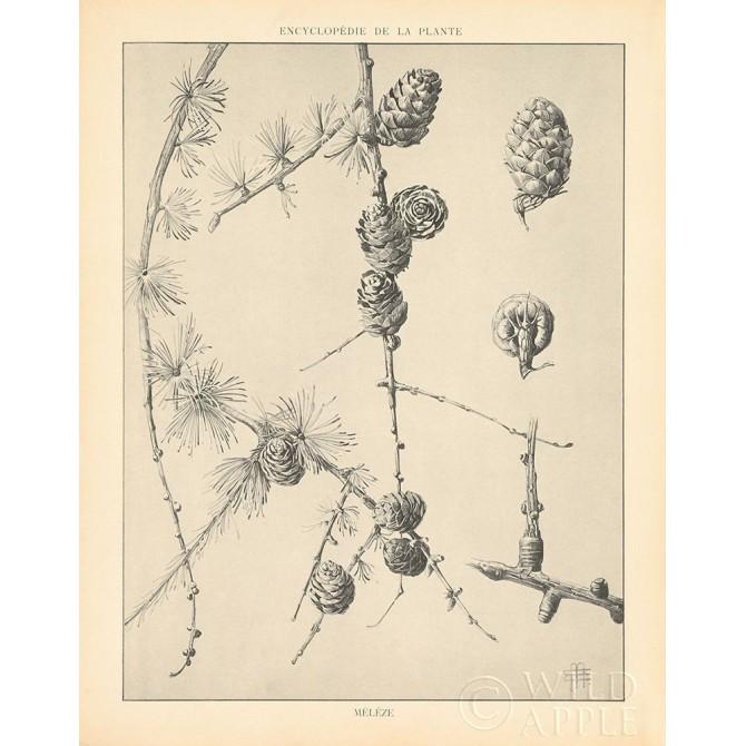 Vintage Tree Sketches II