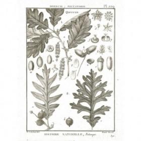 Histoire Naturelle Botanique I Light