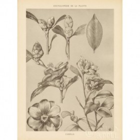 Lithograph Florals II