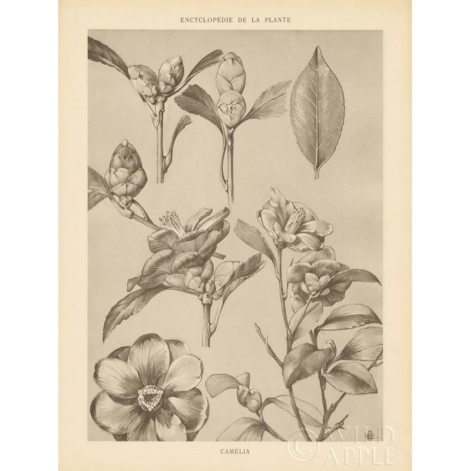 Lithograph Florals II