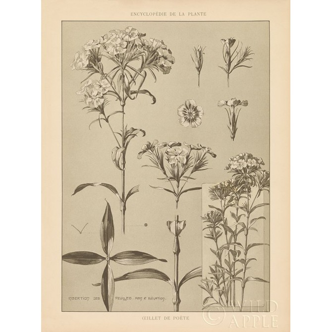 Lithograph Florals III