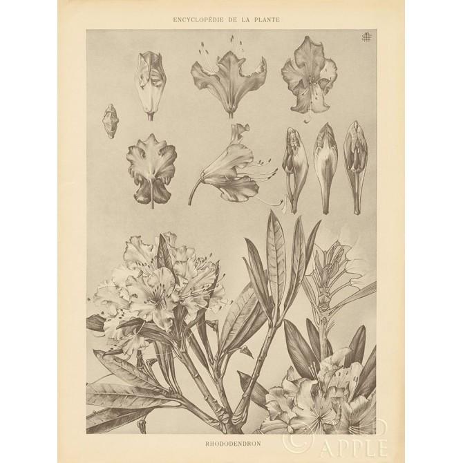 Lithograph Florals IV