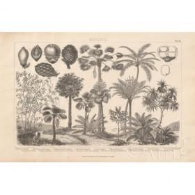 Botanik II Vintage