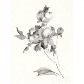 Peony Blossoms Gray Crop