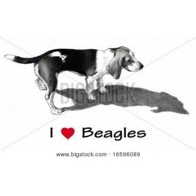 Pencil Drawing of Beagle Dog