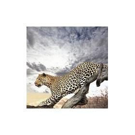 13843856-leopard. 7 tamaños disponibles