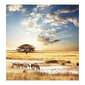 13841870-Zebra. 7 tamaños disponibles