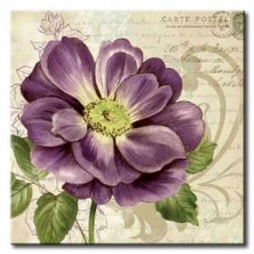 GLA-575_Study in Purple I / Cuadro Flores, Flor Lila sobre fondo Vintage