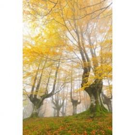 Cuadro Yellow Dreams - JRB 008