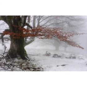 Cuadro invierno otoñal2 -JRB 003