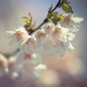 18158 / Cuadro Soft bloom II